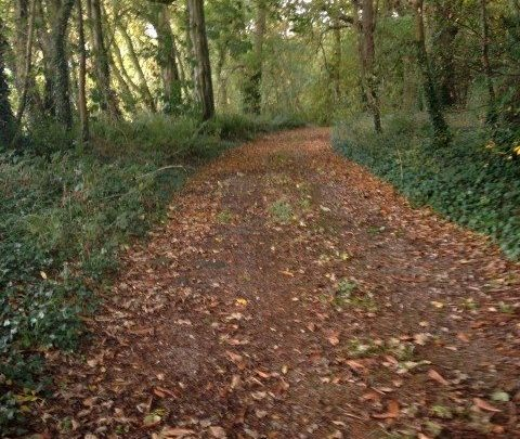 Thomastown, Knockabbey, Ardee, Co. Louth